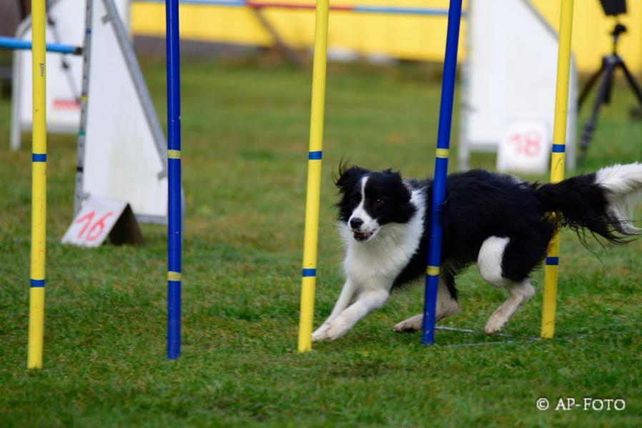 Pacchetto addestramento per il tuo Cane (AGILITY DOG)